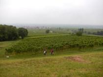 Rhodt unter Rietburg - leider im September-Nebel